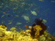 Diving/Great Barrier Reef 2004/DSC02547