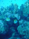 Diving/Great Barrier Reef 2004/DSC06088