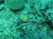 Diving/Great Barrier Reef 2004/PB090095