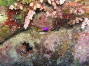 Diving/Great Barrier Reef 2004/PB100018