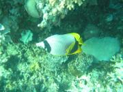 Diving/Great Barrier Reef 2004/PB100027