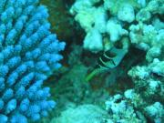 Diving/Great Barrier Reef 2004/PB100045