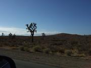 USA/Drive to Las Vegas/Friday 012
